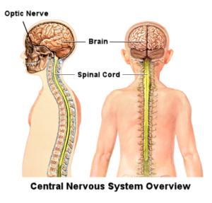 Neuromaze-Plus(Capsule)